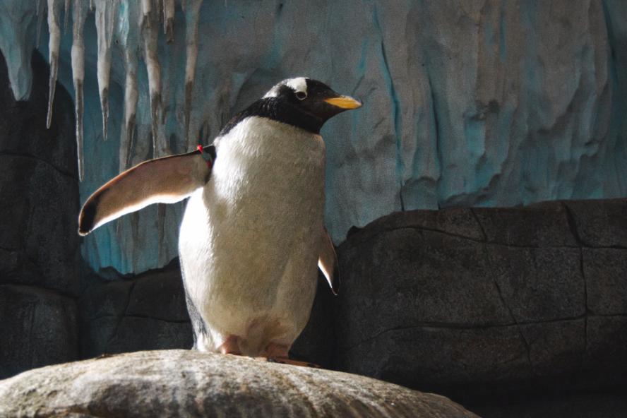 Algorytm pingwin, a pisanie tekstów zapleczowych