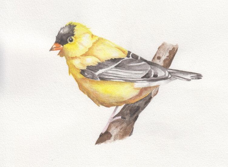 Ilustracja ptak - jak wyróżnić wpis na blogu